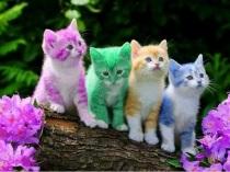 4 color